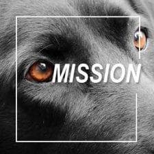MBARQ_icon_black_dog_mission_400x400 2