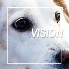 MBARQ Solutions Vision Graphic