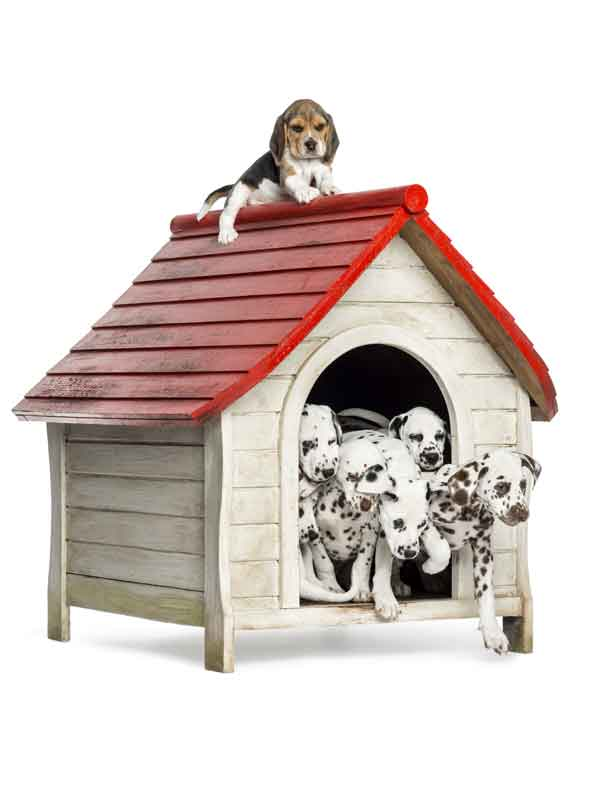 MBARQ Solutions Doghouse Image